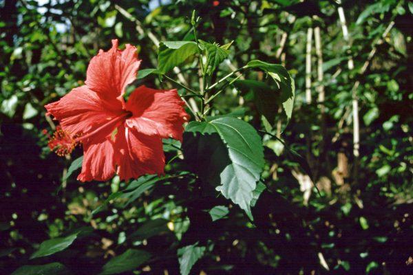 Marquesas Fatu Hiva10