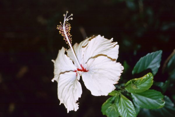 Marquesas Fatu Hiva11