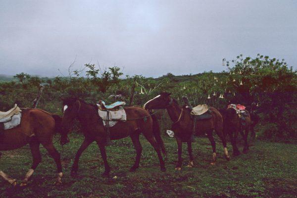 Pazifik Galapagos Isabela zum Vulkan unsere Pferde