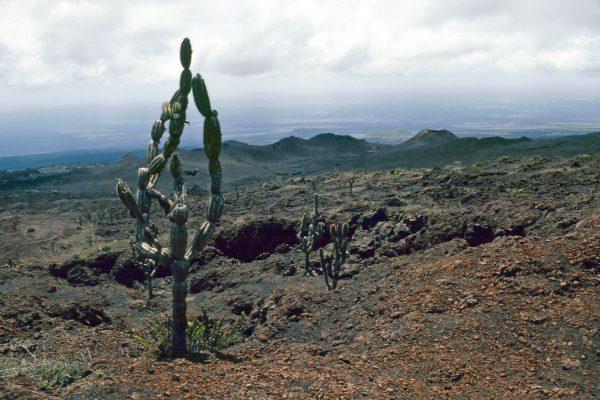 Pazifik Galapagos Isabela zum Vulkan: Der Blick zurück