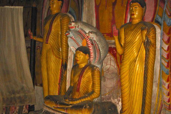 Sri-Lanka--Dambulla-22