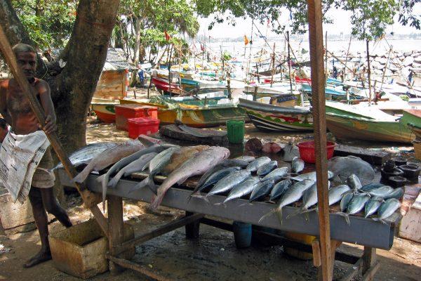 Sri Lanka/ Galle/ Hafen/  Fischmarkt