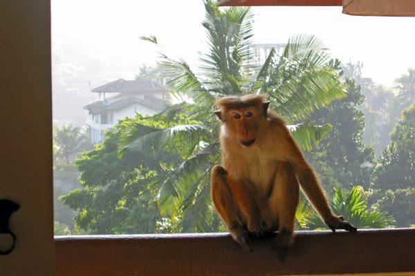 Sri-Lanka--Kandy-17