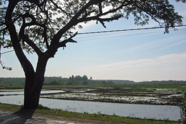 Sri Lanka/  Landwirtschaft