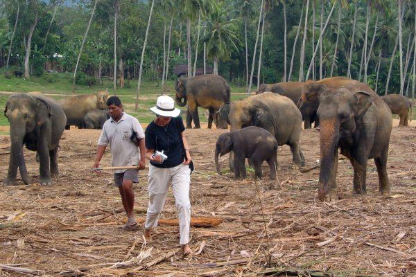 Sri Lanka  Pinewala 10