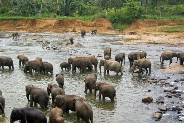 Sri Lanka  Pinewala  4
