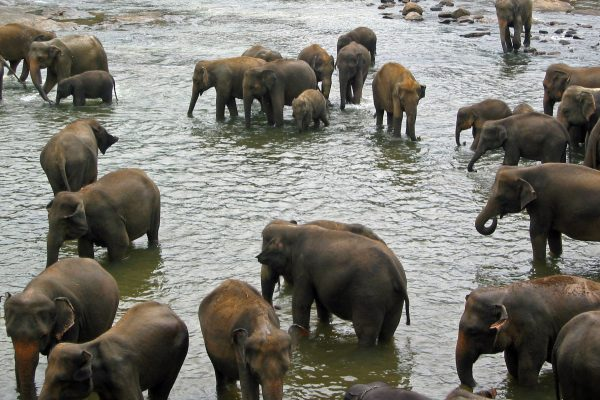 Sri Lanka  Pinewala  5