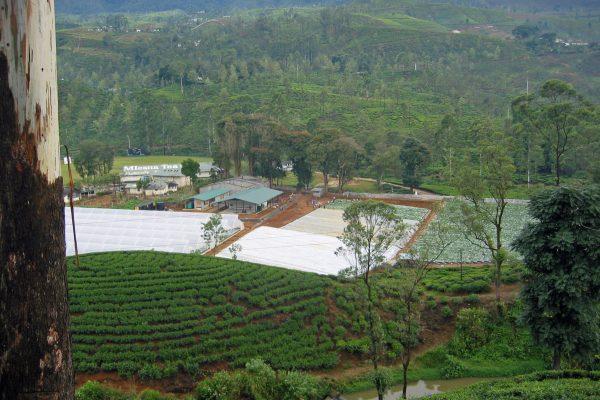 Sri-Lanka-Reise-Unterwegs-14