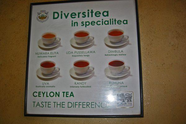 Sri Lanka  Teeplantage  2