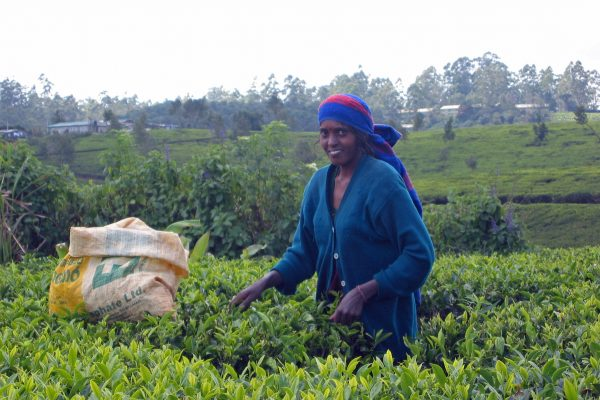 Sri Lanka  Teeplantage  5
