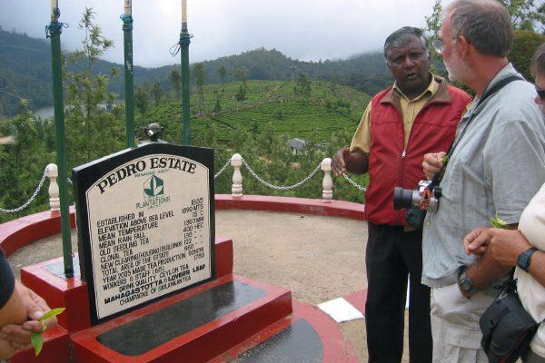 Sri Lanka  Teeplantage  7