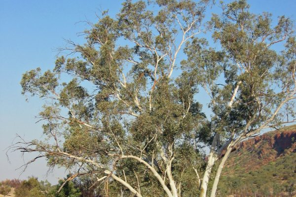 MacDonnell-Ranges-010