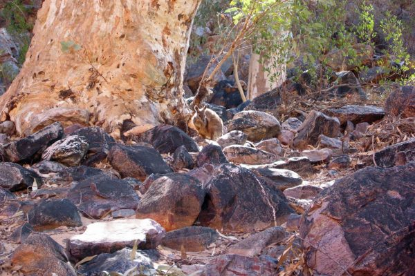 MacDonnell-Ranges-017