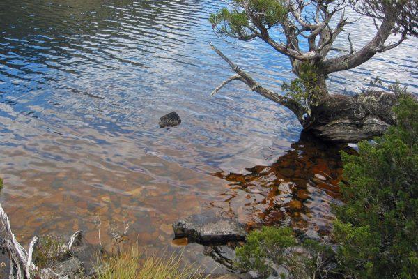 Tasmania-Cradle-Mountins3