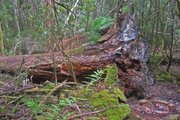 Tasmanien_SW_Nationalpark13