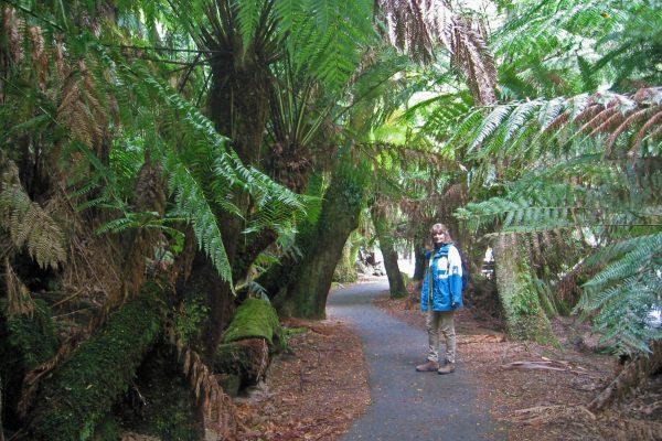 Tasmanien_SW_Nationalpark14