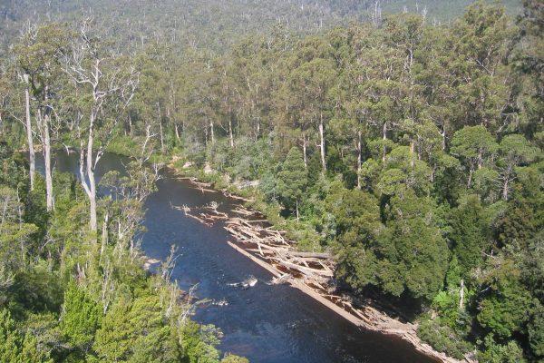 Tasmanien_SW_Nationalpark_5