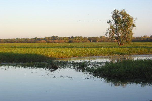 Yellow-River-Billagong2b